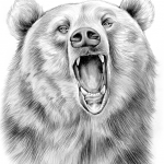grizzly_bear_in_graphite_pencil_by_gregchapin-d5ifp8x